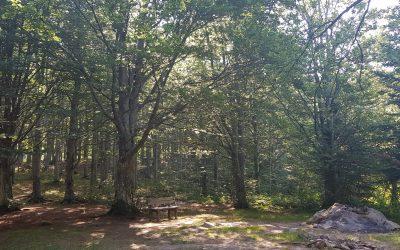 Yoga e Meditazione al parco da Maggio a Settembre